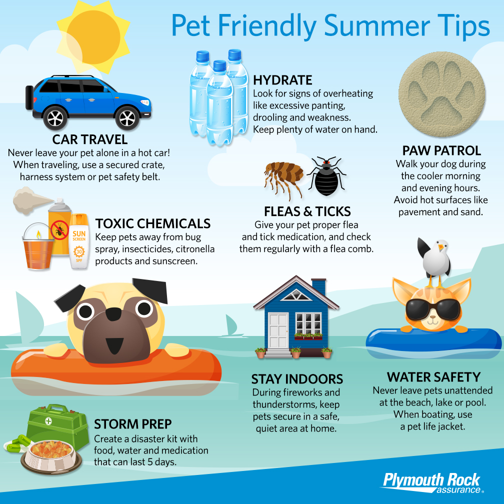 summer pet safety tips infographic, including storm prep and water safety